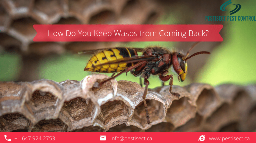 How Do You Keep Wasps from Coming Back