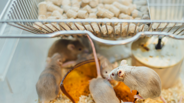 Mice carry diseases