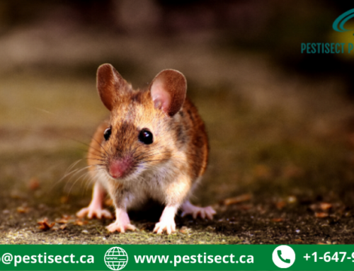 Why Mice Keep Coming Back to Your House? Here is What You Need to Know