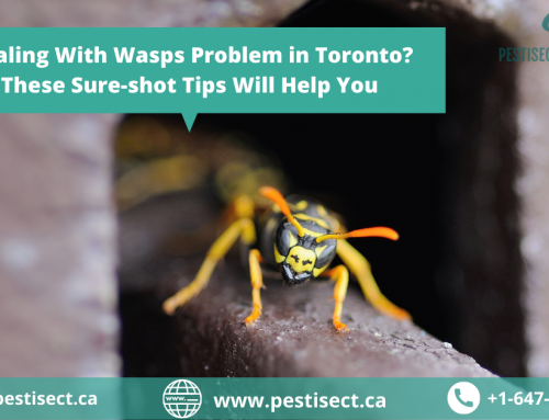 Dealing With Wasps Problem in Toronto? These Sure-shot Tips Will Help You