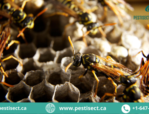 Want to Get Rid of Paper Wasps In Your Home? Here is What You Should Do