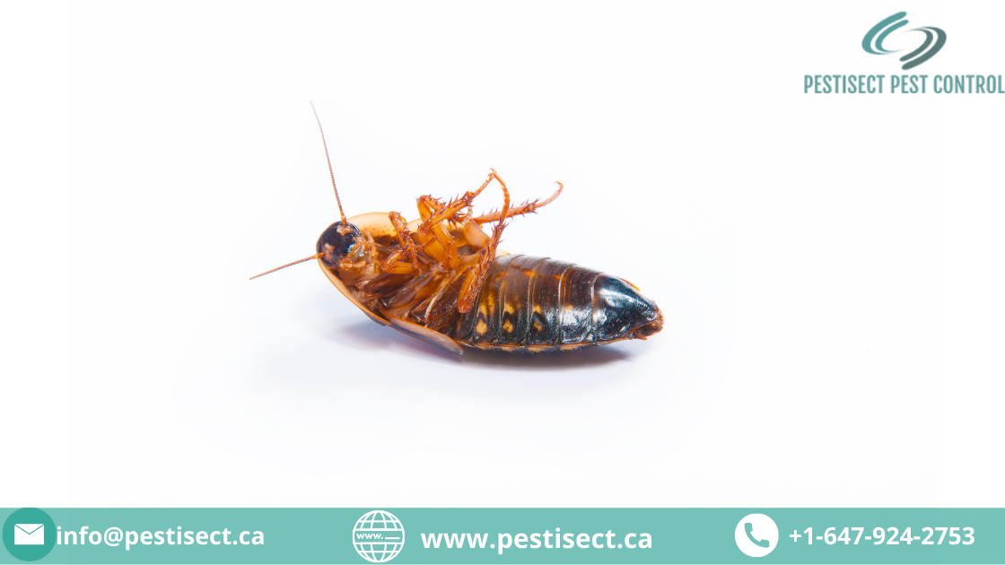 Tips to Keep Your Home Pest-free, Now and Forever