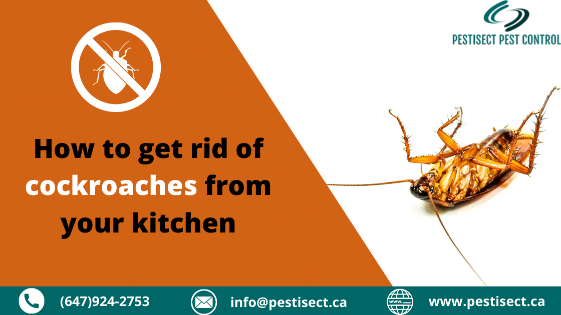 How to get rid of cockroaches from your kitchen